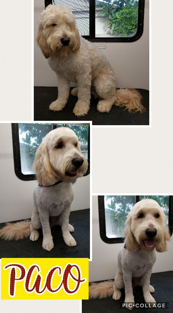 Pet Grooming On The Go: Clearwater, FL