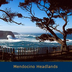 Photo Of Old Gold Mendocino Ca United States
