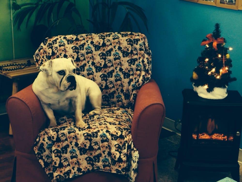 Bubbles Dog Grooming Spa Huntington Beach Ca