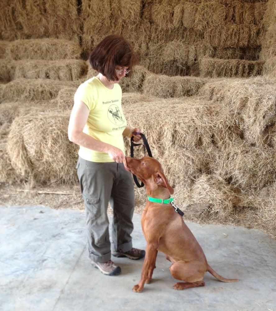 Positive Solutions Dog Training: Gresham, OR