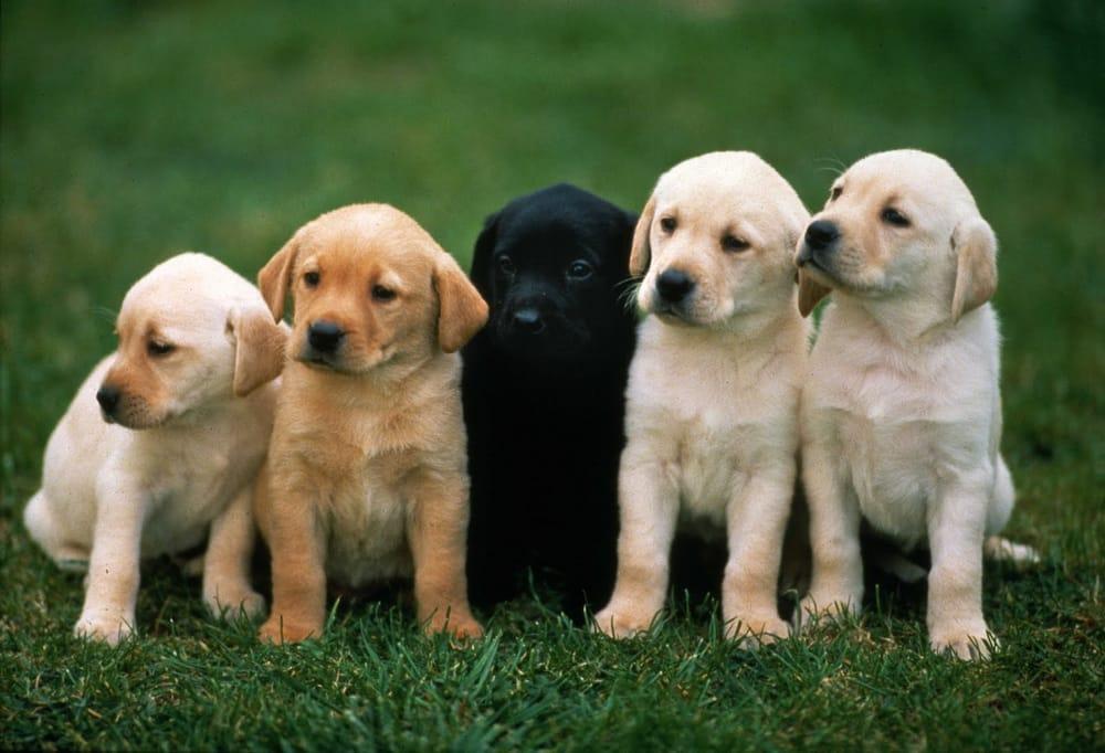 Cleveland Pet Hospital & Health Center | 2619 Cleveland Blvd, Caldwell, ID, 83605 | +1 (208) 459-0709