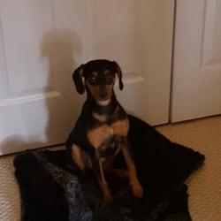 Bark Busters Home Dog Training Lexington Ky