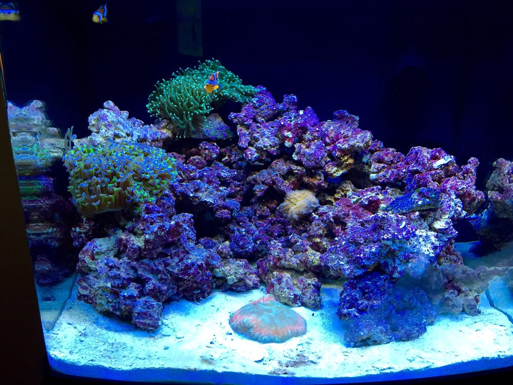 Photo of Caesaru0027s Tropical Fish Factory Inc - Santa Rosa CA United States. & Biocube 29 reef tank - Yelp