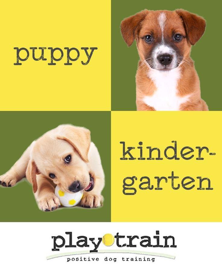 PlayTrain Positive Dog Training, Inc.: Weston, FL