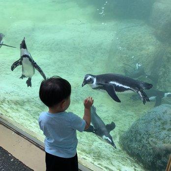 Adventure Aquarium - 1 Riverside Dr, Camden, NJ - 2019 All