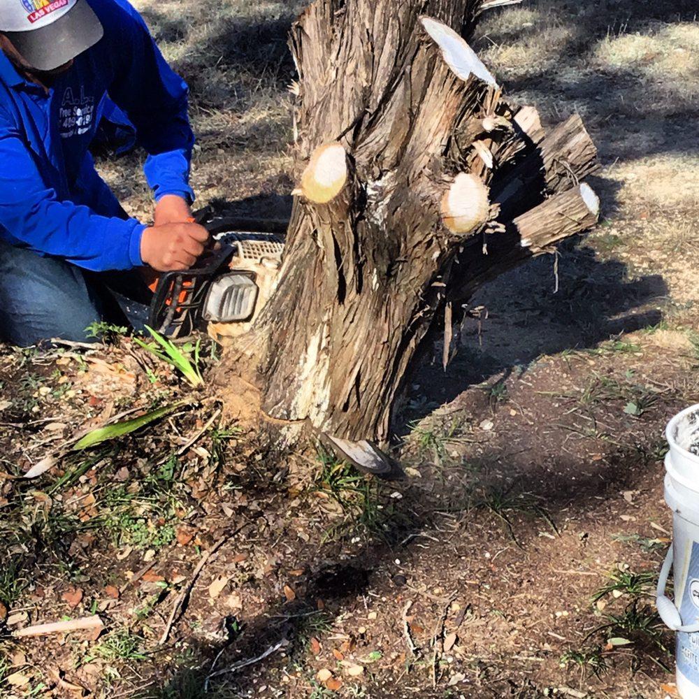 A.L. Tree Services: 7113 San Pedro Ave, San Antonio, TX