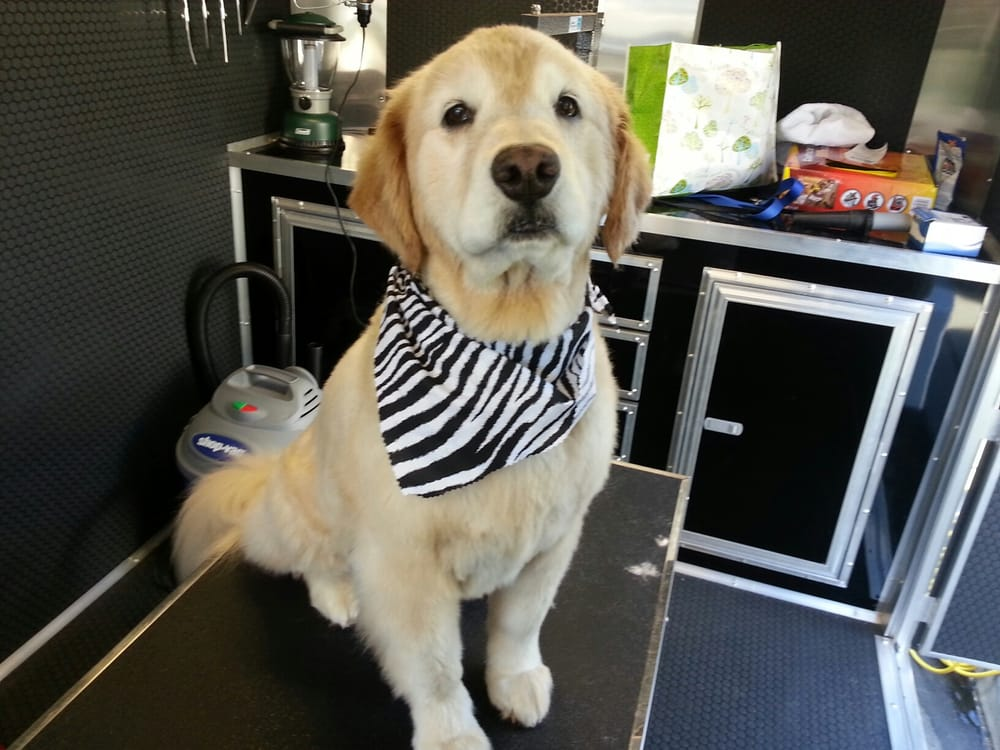 Dog Grooming Livermore Ca