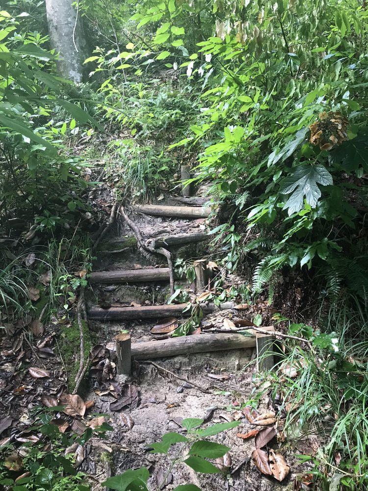 Garden of Eden Trail: Garden Of Eden Rd, Bristol, FL