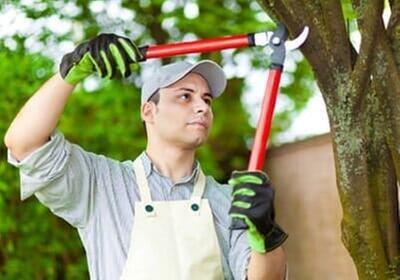 Lumber Jack Tree Service: 302 S Market St, Bondville, IL