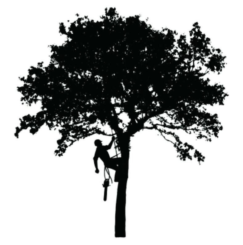 Southern Ohio Tree Service: Glouster, OH