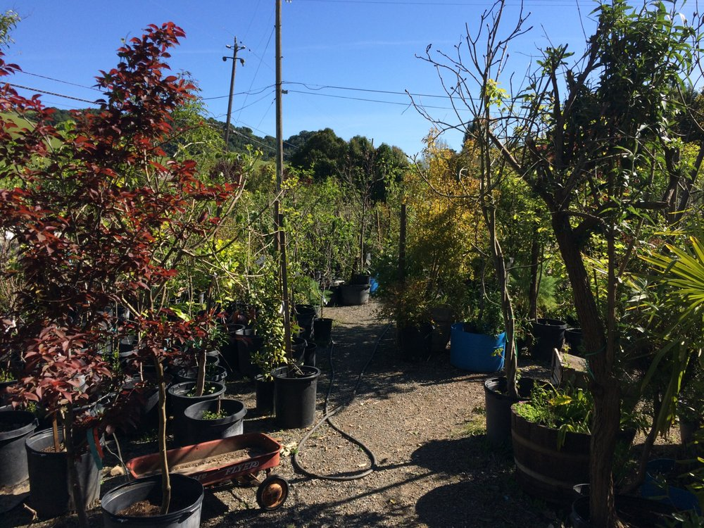 Damanakis N Nursery & Landscaping: 9150 Crow Canyon Rd, Castro Valley, CA