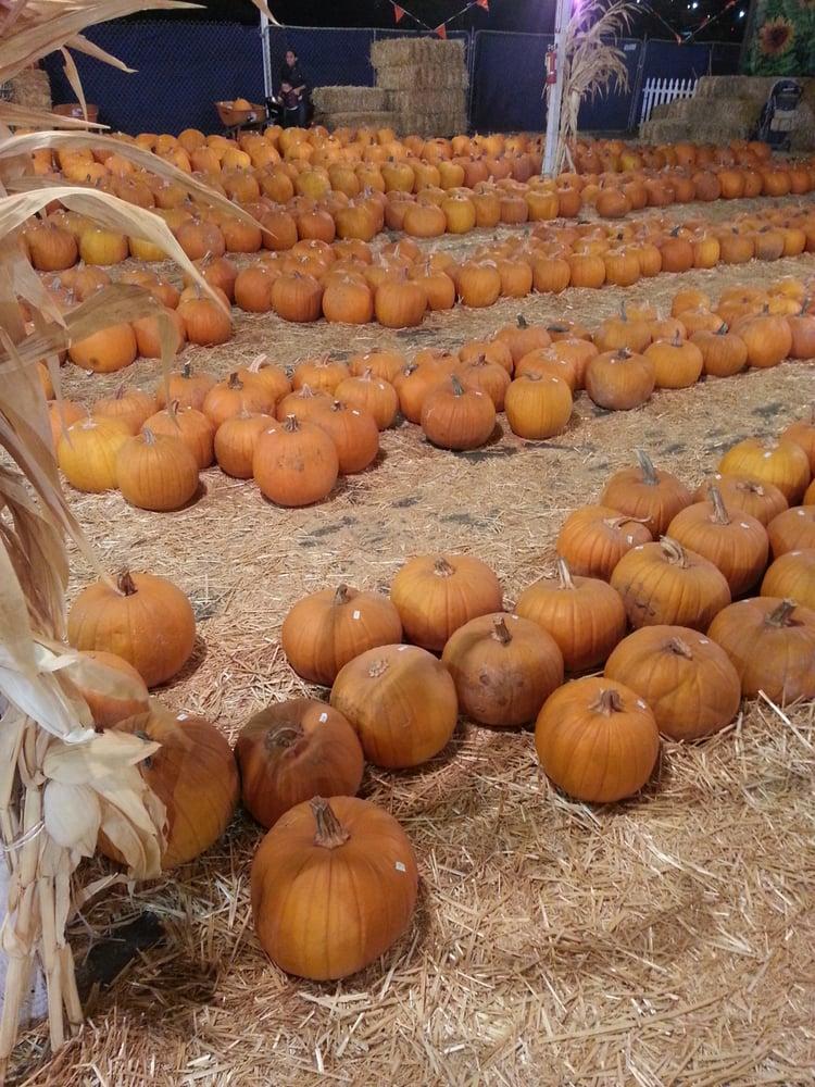 Pumpkin station chula vista coupon
