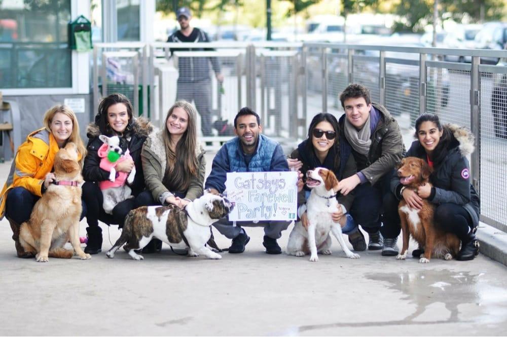 Photo of Gimme Paw Dog Walking Service: Long Island City, NY