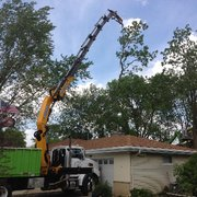 Wonderful Removing Tree In ...