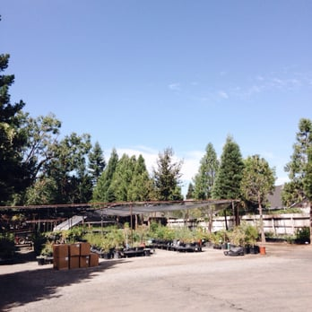 Photo Of Floral Native Nursery   Chico, CA, United States