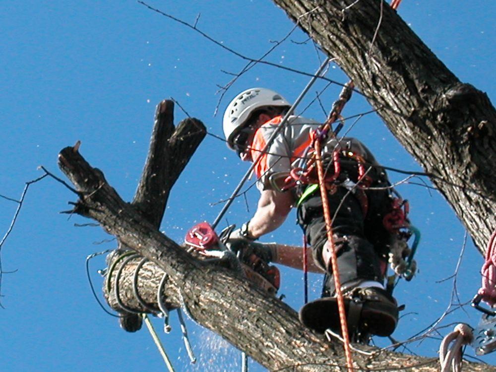 Botetourt Tree Service: Cloverdale, VA