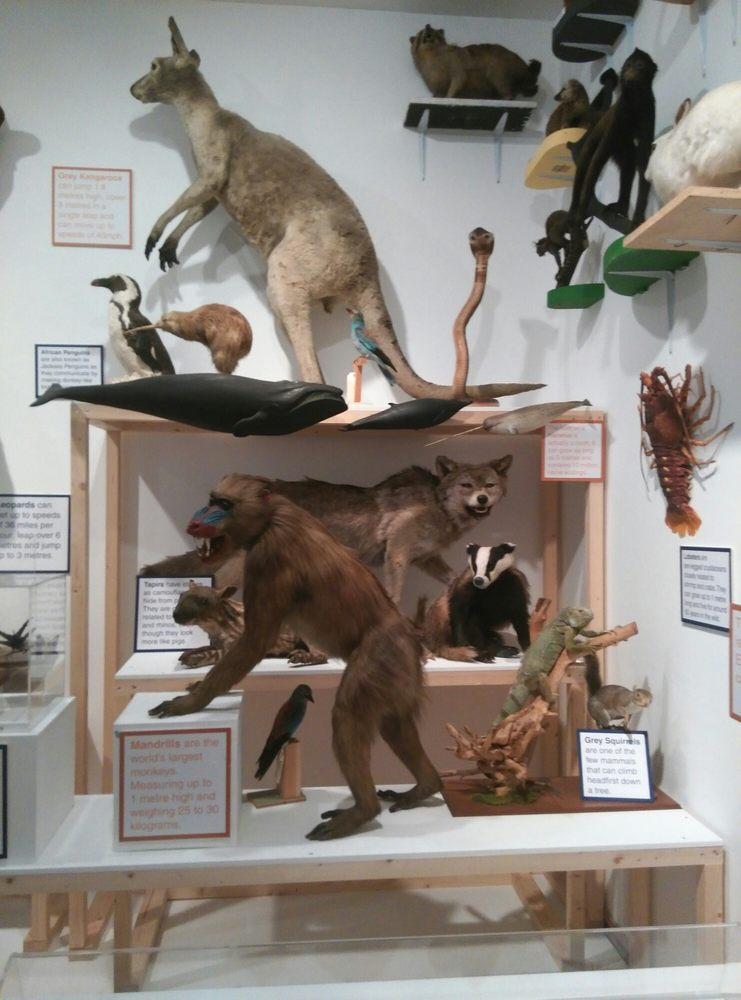 Bolton Museum, Art Gallery and Aquarium