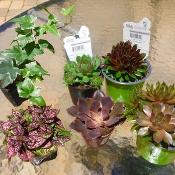 Photo Of Peti Garden Center Bedford Oh United States Baby Succulent Purchases