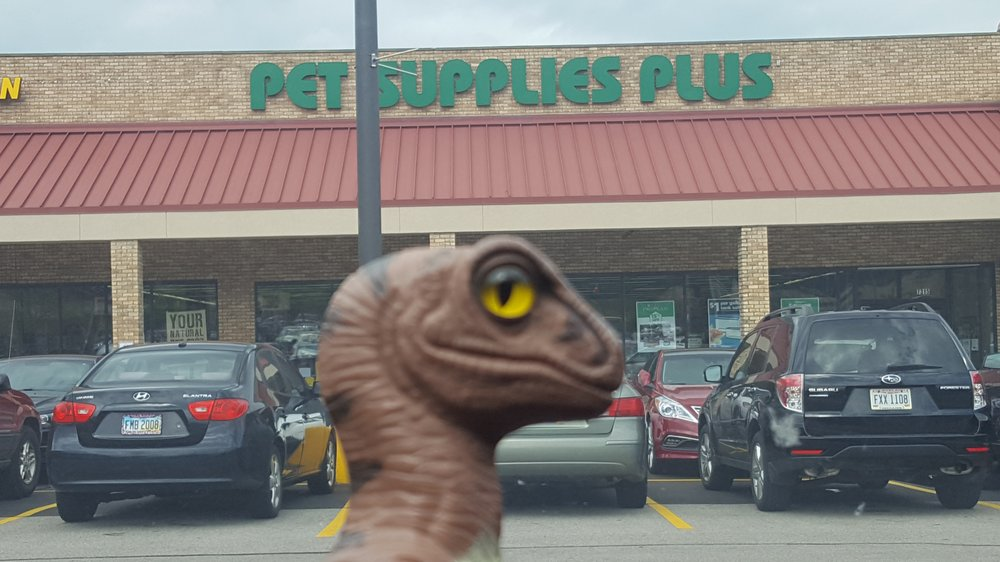 Bob The Raptor Says Four Legged Mammals Come Here Yelp