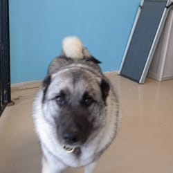The dog wash closed 15 reviews pet groomers 2066 e southern photo of the dog wash tempe az united states love the furry solutioingenieria Choice Image