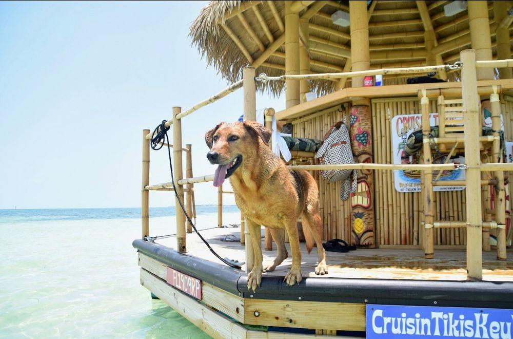 Cruisin Tikis Key West: 1605 N Roosevelt Ave, Key West, FL