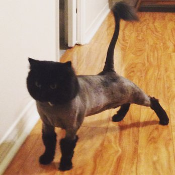 All Over Rover & Cats Too - 54 Photos & 61 Reviews - Pet Groomers