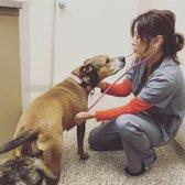 larawan ng garden grove dog cat hospital garden grove ca estados unidos - Garden Grove Dog And Cat Hospital
