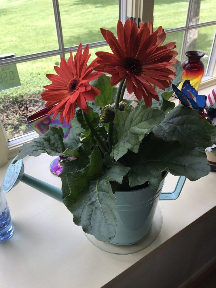 Flowers Galore & More: 6837 E Cass City Rd, Cass City, MI