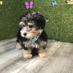 Nessy Puppies - 6805 SW 40th St, Miami, FL - 2019 All You