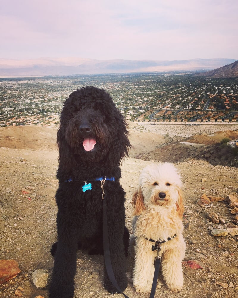 The village pup 14 reviews pet boarding pet sitting for Dog boarding places near me