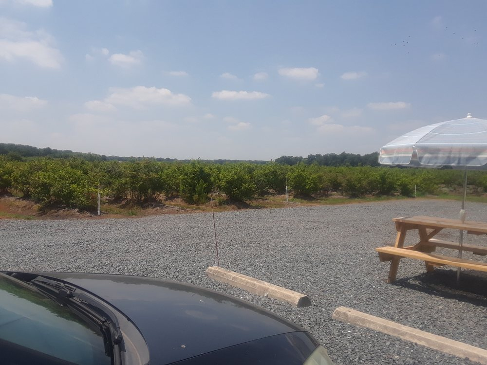 KIngsley Orchards Blueberry Farm: 24349 Rd 402, Frankford, DE