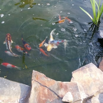 High Quality Photo Of Mystic Koi U0026 Water Gardens   Upland, CA, United States. Other