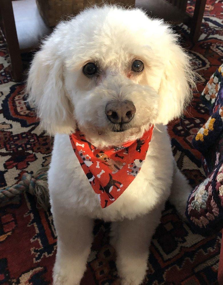 Amy's Animals Professional Dog Grooming: 170 Jackson St, Belchertown, MA