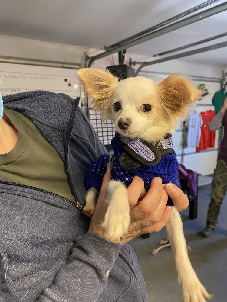 The Lucky Puppy Rescue: 511 Pleasant Valley Rd, Argyle, NY