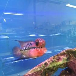 International Aquarium - 16 Photos & 55 Reviews - Aquarium Services