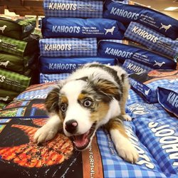 The Best 10 Pet Stores Near Broadway Puppies In Escondido Ca Yelp