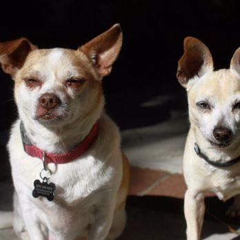 Master Dog Training - 341 Photos & 26 Reviews - Pet Training