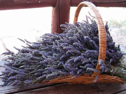 Windy Hills Lavender Farm 3374 Stone Bridge Trl Heber, AZ