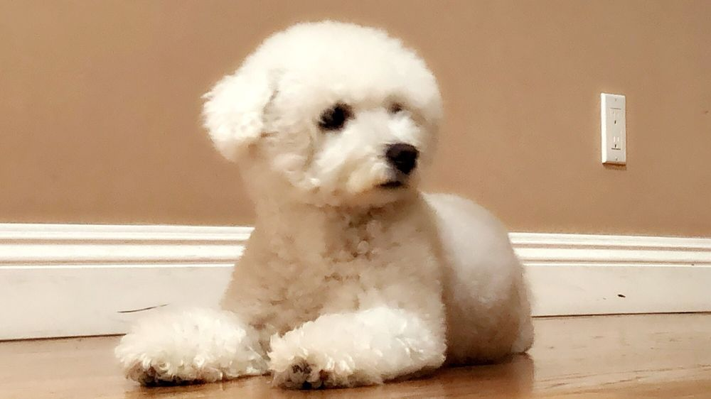 Happy Paws Hundepflege