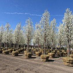 Wilson Nurseries and Landscape Supply - (New) 13 Photos