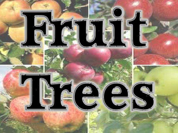 Parkland Tree Farm: 3645 W Rak Rd, Douglas, AZ
