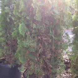 Photo Of Nj Plants And Trees Burlington Township United States