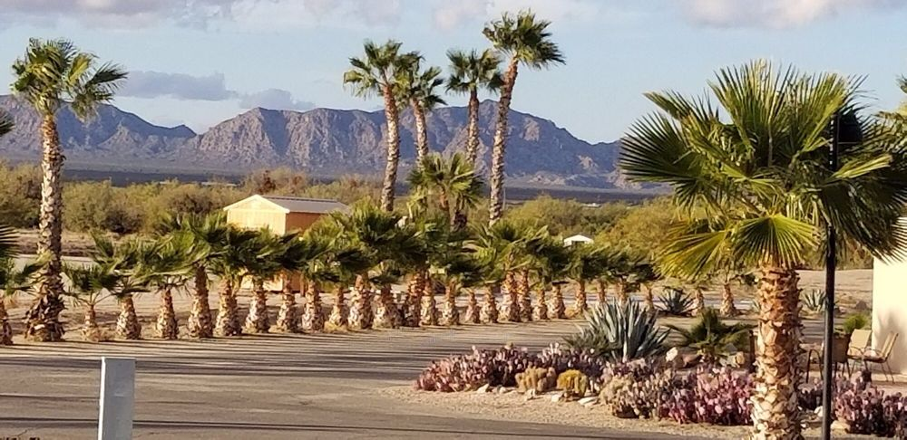 Desert Palm Golf & Rv Resort: 39258 Harquahala Rd, Salome, AZ