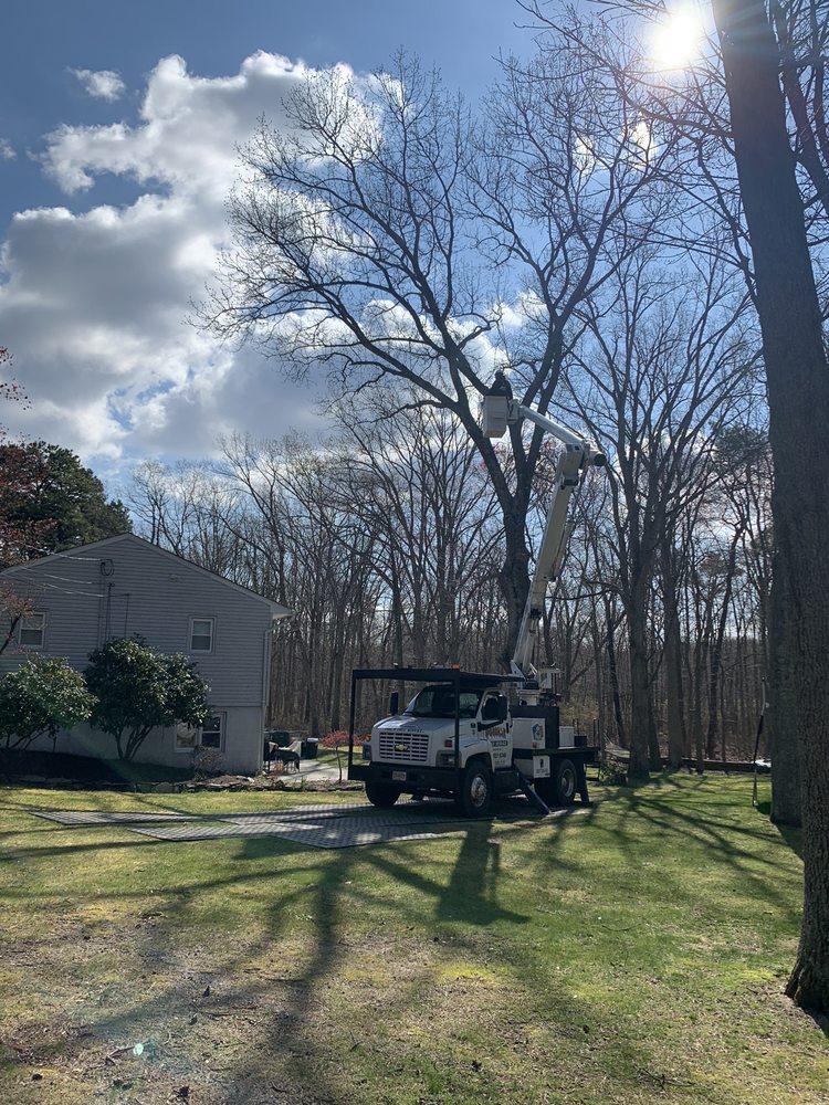 Phil's Tree Service: 539 Vath St, Jackson, NJ