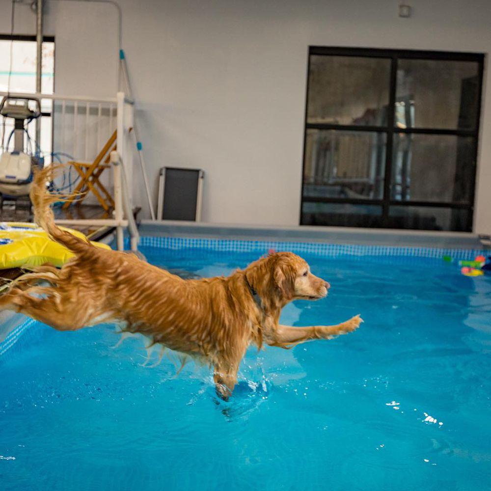 Dog Pool Club