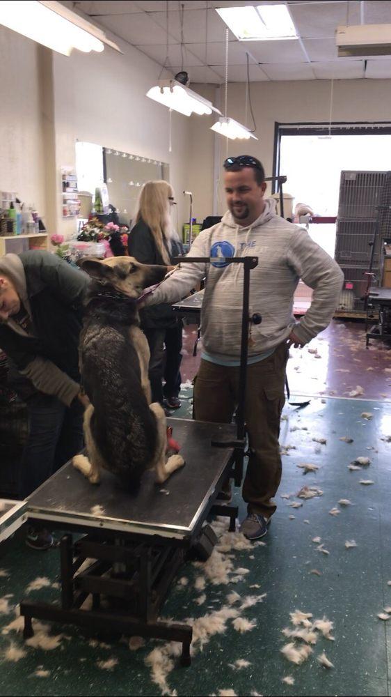The Dog Wizard: 3439 Jonathon Dr, Beavercreek, OH