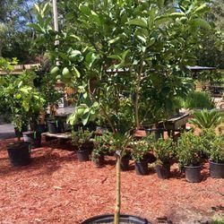 Photo Of Bartram Trail Nursery Jacksonville Fl United States