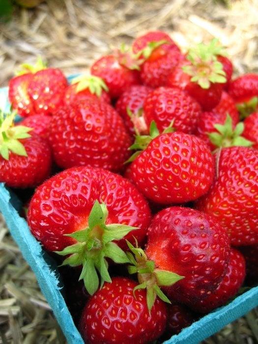Stevenson Strawberries: 271 Tucker Rd, Wayne, ME