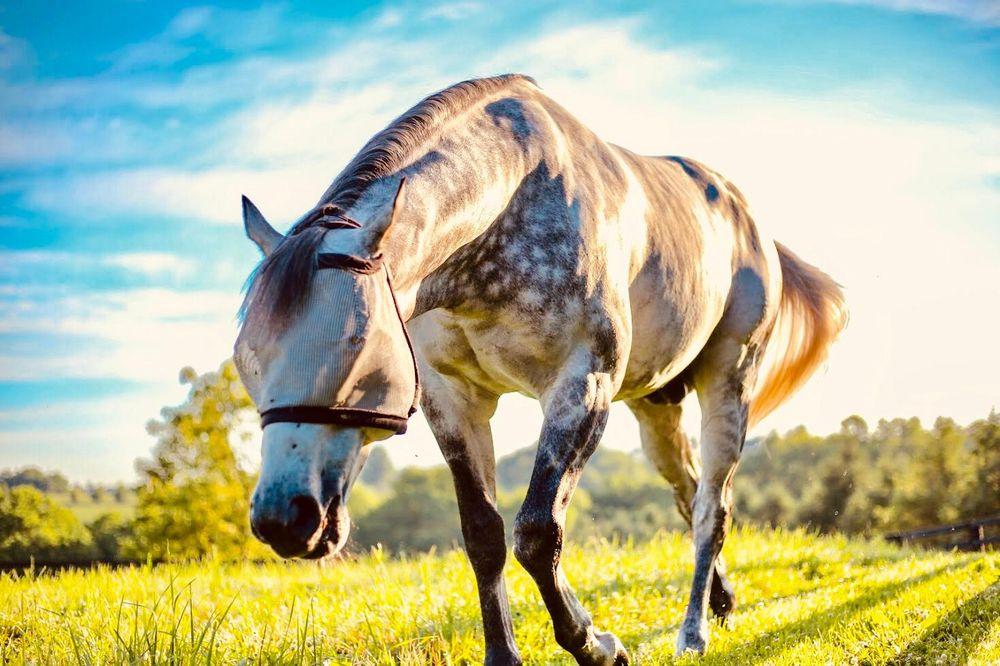 Horse Country: 321 Merino St, Lexington, KY