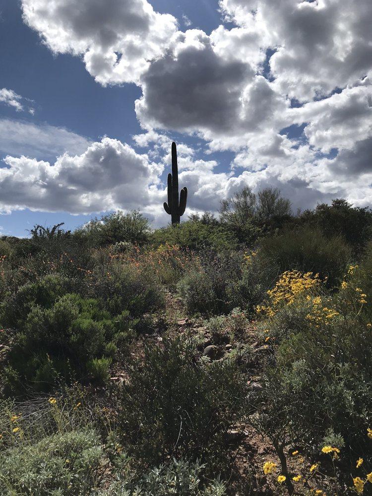 Tonto National Forest: Tonto Basin, AZ